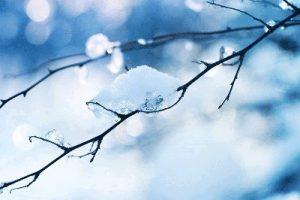 CHANDRA Elemento Acqua - Inverno